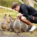 Feeding Wallabies