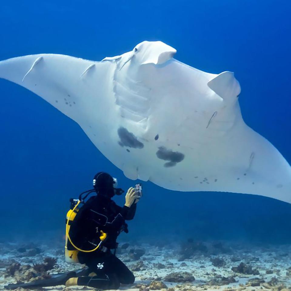 whitsundays tour manta ray