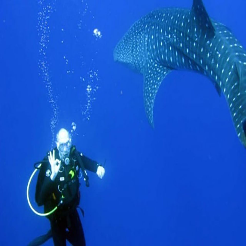 One stop adventures scuba dive whale sharks