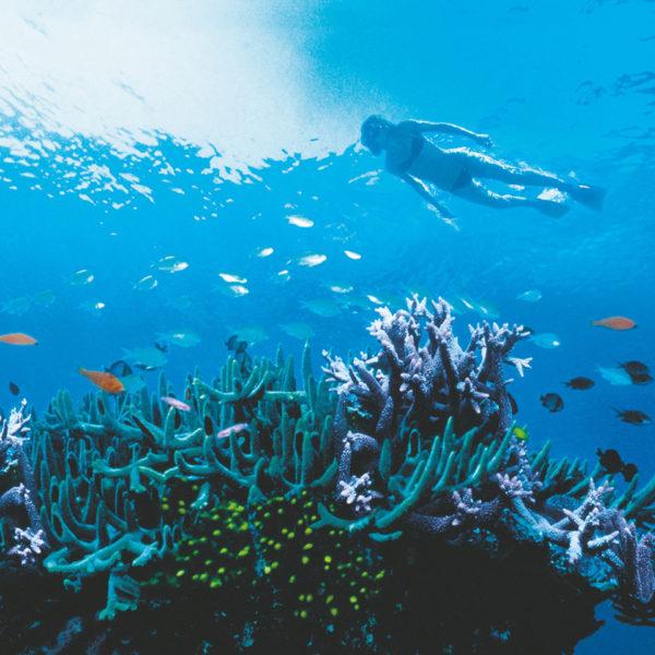 whitsundays snorkelling tour