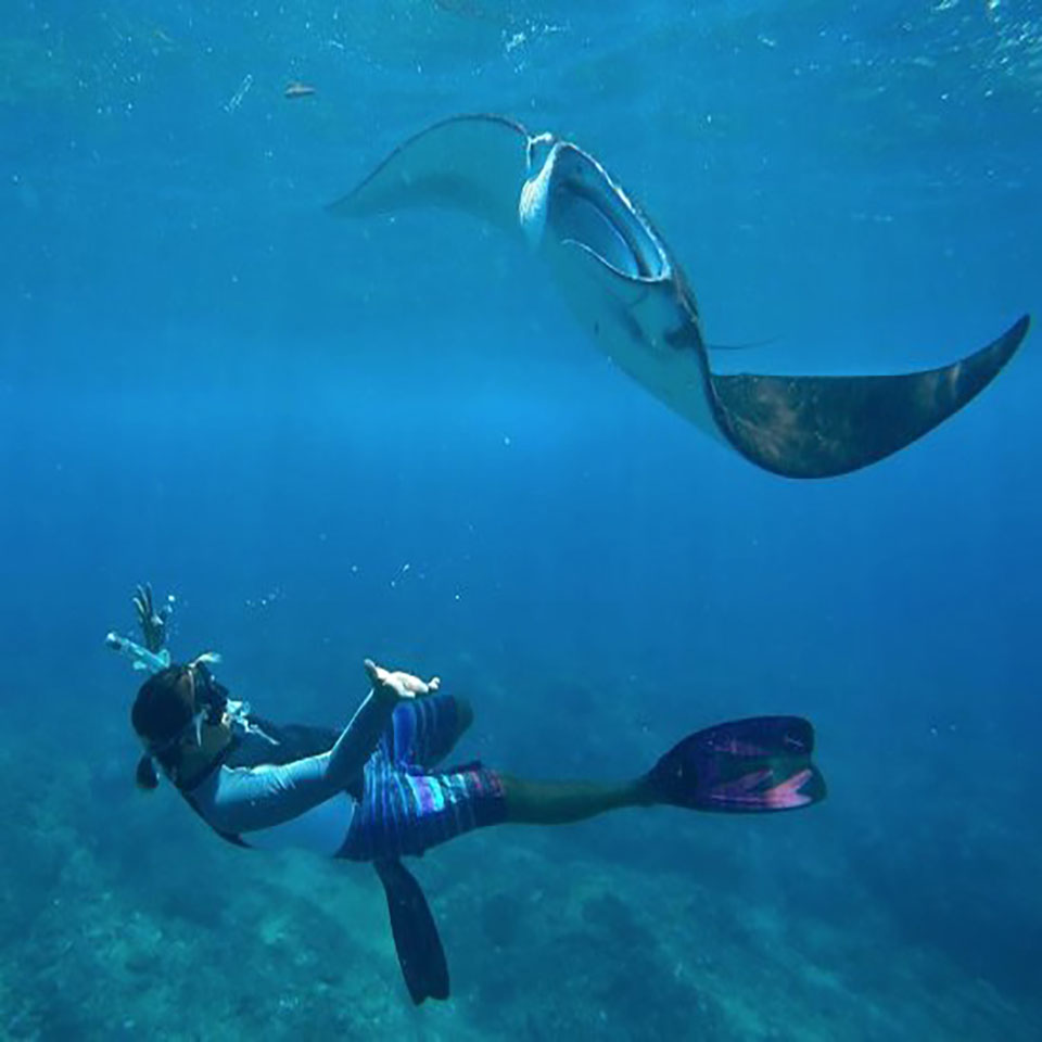 One stop adventures snorkelling manta ray